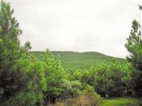 Bom Jardim da Serra -100 hectares a 3km da Rodovia - 140 mil árvores de Pinus