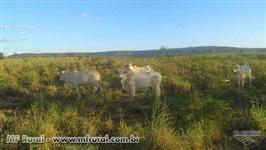 Fazenda de 350 ha produzindo, estruturada, no asfalto da BR 135 a 100 km de Barreiras.