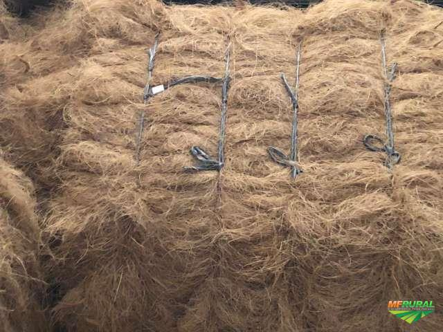 fibra longa de coco seco