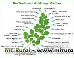 MUDAS DE MORINGA OLEÍFERA - ACEITAMOS ENCOMENDAS