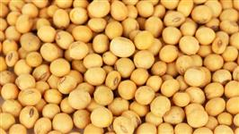 Compro Soja GMO
