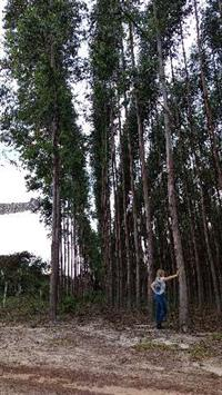 Fazenda de eucalipto excelente oportunidade