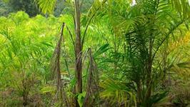 Sitio Miracatu
