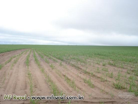 Fazenda em cana em Mineiro-GO - 4066 has