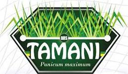 Sementes de Panicum maximum cv. BRS TAMANI Incrustado - Primeiro HIBRIDO EMBRAPA