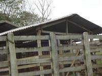 Fazenda no Vale do Ribeira com ótima para plantação de palmito, laranja, pecuária leiteira...