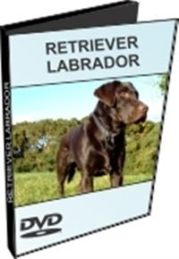 Retriever Labrador - DVD