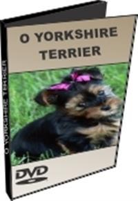 O Yorkshire Terrier - DVD  Labrador - DVD