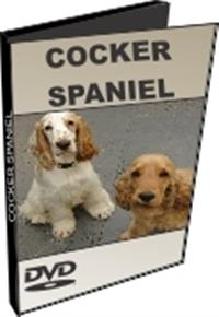 Cocker Spaniel - DVD