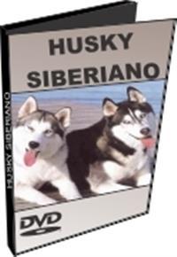 Husky Siberiano - DVD