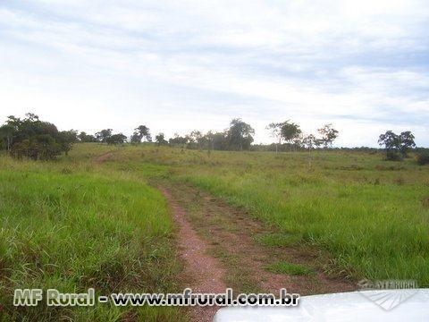 Fazenda 438 he. municipio de Poconé à 100 Km. de Cuiaba