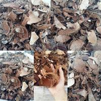 Casca de coco seco
