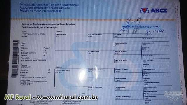 Touro Gir PO registrado