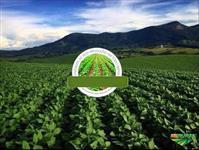 Fazenda no Sul de Minas Gerais á 280 km de São Paulo Capital, produz soja, milho e gado - COM 265 HA