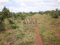 Fazenda  com preço de oportunidade a 09 km do asfalto