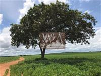 Fazenda plantando soja com ótimas condições de pagamento em Centenário -Tocantins