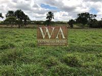 Fazenda com preço de oportunidade na região do vale do Araguaia
