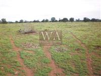 Fazenda com dupla aptidão a 13 km da BR 153