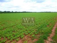 Fazenda com (320 há) em lavoura para plantio de grãos em Figueirópolis-Tocantins