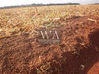Fazenda com 700 há plantando de lavouras em região