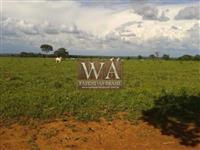 Fazenda excelente para plantio de grãos com safra e safrinha, pecuária e integração das mesmas
