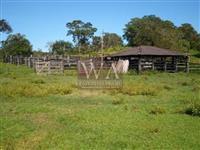 Fazenda excelente para pecuária e lavoura