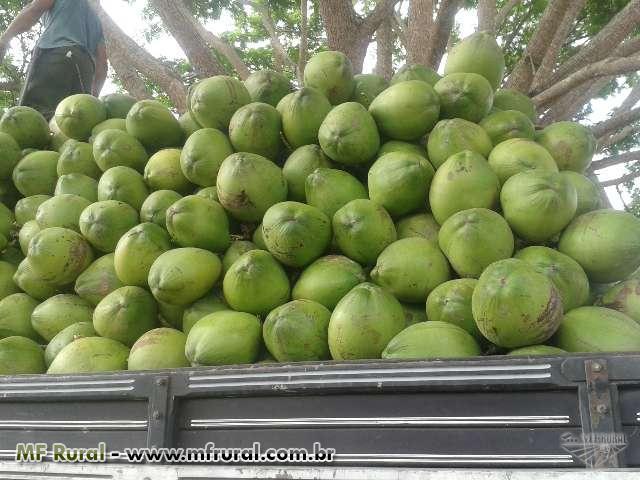 Coco Verde Capixaba