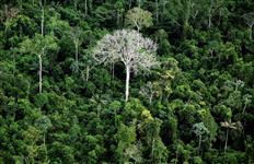 Venda de áreas no Amazonas, Pará, Tocantins, Maranhão e Goiás para reserva legal