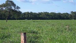 Fazenda de 1.200 alq.(5.808 ha.) Divinopolis-To