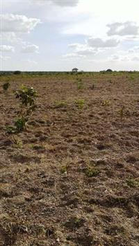 Arrendamento de 2.200 ha na região do Município da lagoa da Confusão - To