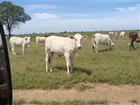 Fazenda de 1.070 ALQ.(5.178 HÁ)  em Jussara-GO