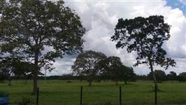 Fazenda de 42 alq.(203 ha.)  em Dueré-To