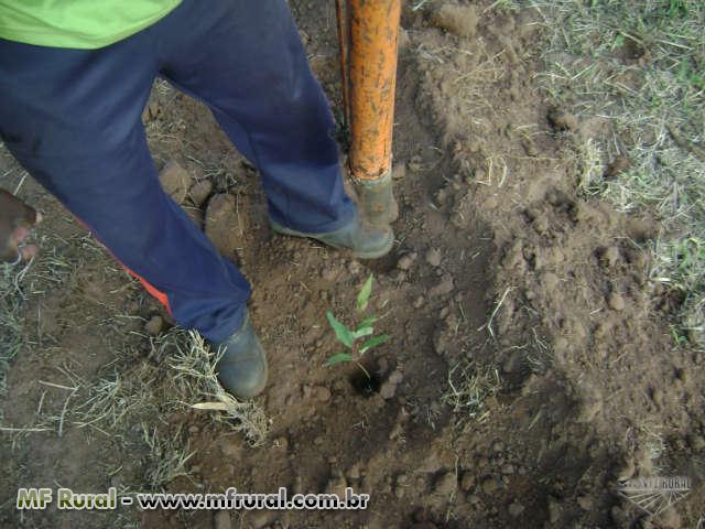 EucaFlora Reflorestamento